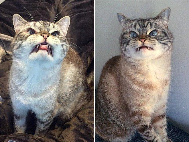 gatto vampiro 14