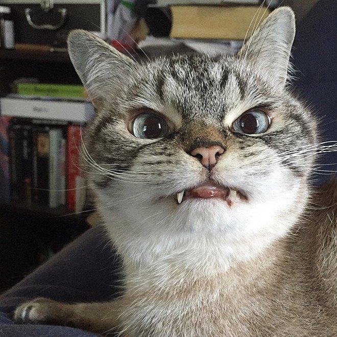 gatto vampiro 6