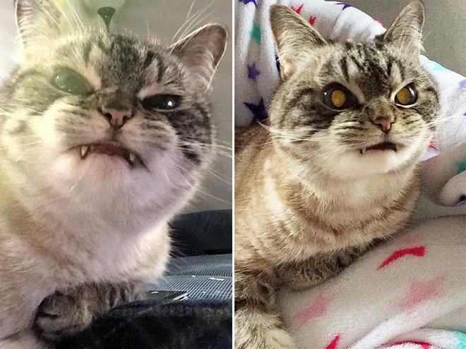 gatto vampiro 9