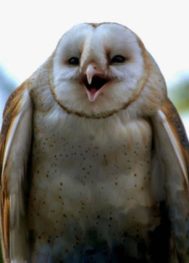 21-owls-that-have-stolen-the-show-14-is-a-little-nugget16.jpeg.pagespeed.ce.w36lRhwPO4