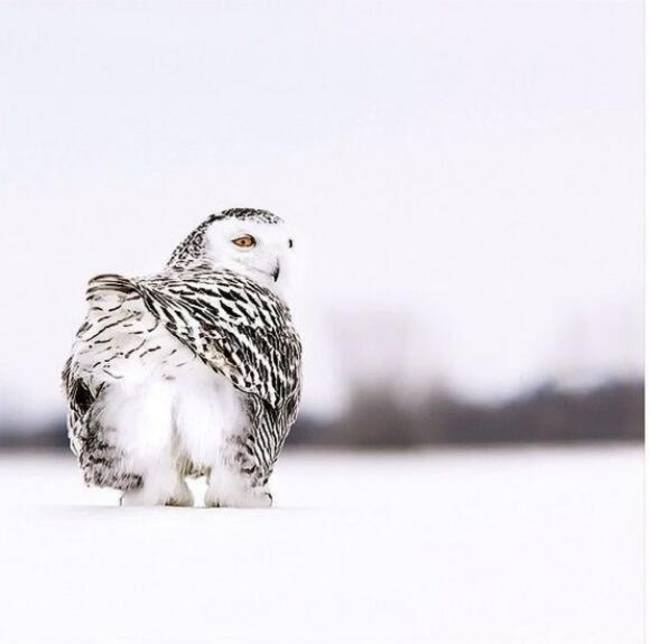 21-owls-that-have-stolen-the-show-14-is-a-little-nugget7.jpeg.pagespeed.ce.wqxccQl8_U
