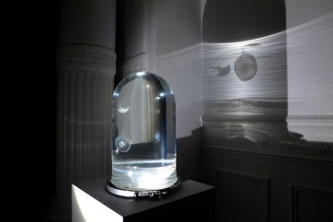 Amazing Jellyfish aquarium is a work of art1 700