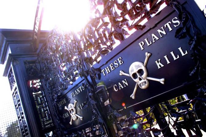 Alnwick-Poison-Garden-e1305624548458
