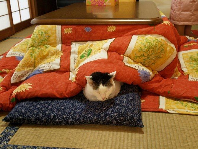 kotatsu japanese heating bed table 10
