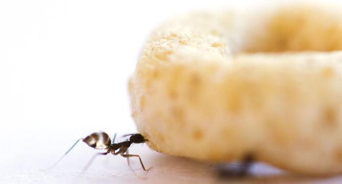 Colazione da formica