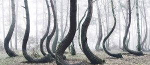 foresta-storta