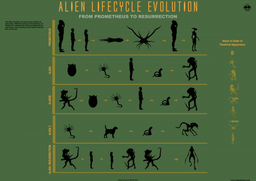 the_alien_lifecycle_evolution_infographic_by_mauricem-d55c8pw