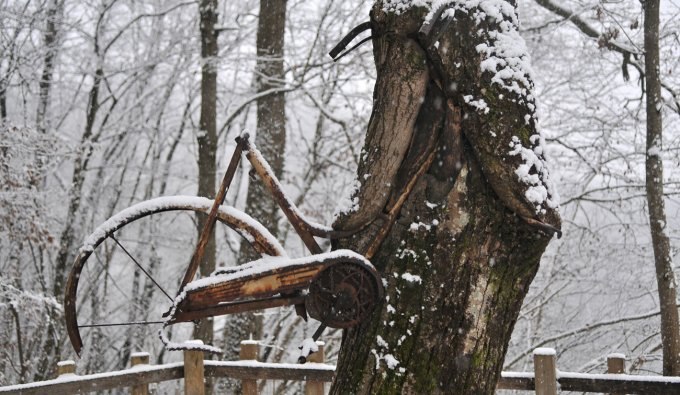 albero bicicletta sitran
