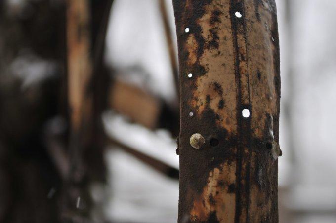 L'albero che ha mangiato la bicicletta