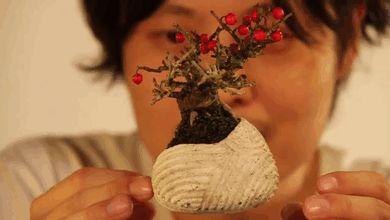 floating-bonsai-trees-air-hoshinchu-gif-31