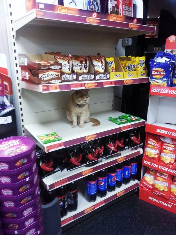 supermarket-sainsburys-cat-olly-oliver-brockley-london-71