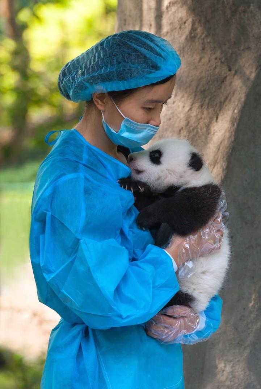 PandaCuddle1