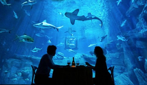 Night At The Shark Aquarium
