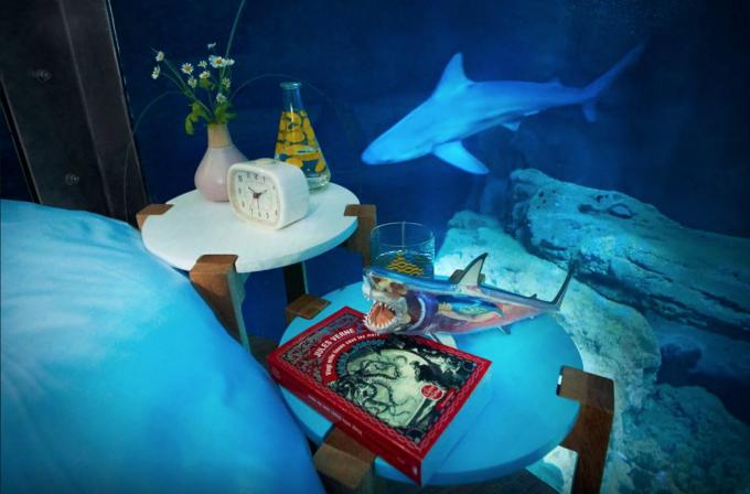 Night At The Shark Aquarium