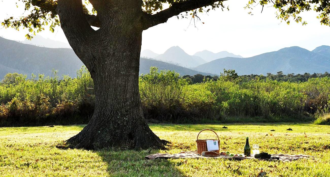 picnic gadget pasquetta