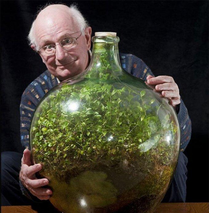vecchio con l'erba