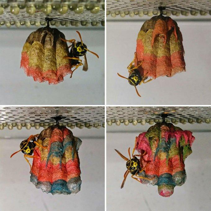 nidi vespe colorati