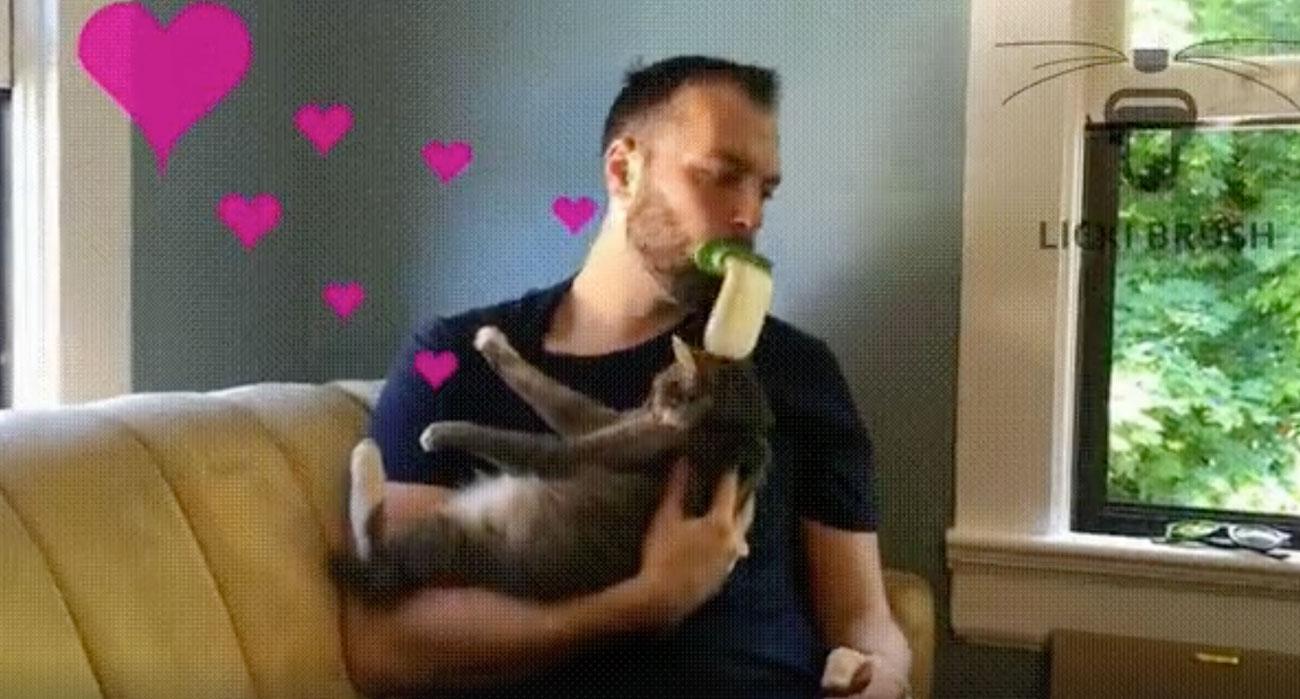 lingua finta leccare gatto