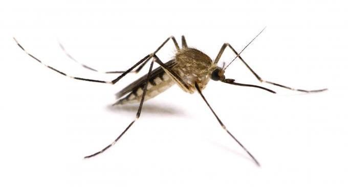 app anti zanzare