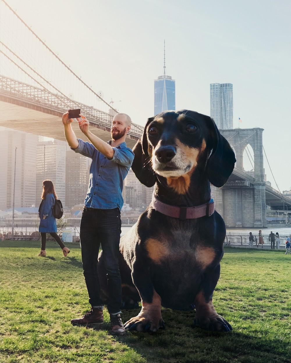 vivian cane bassotto gigante