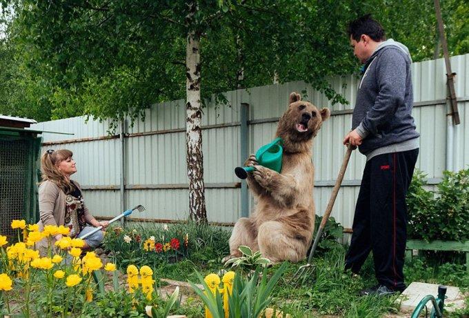 orso domestico russia