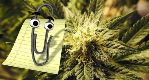 microsoft marijuana