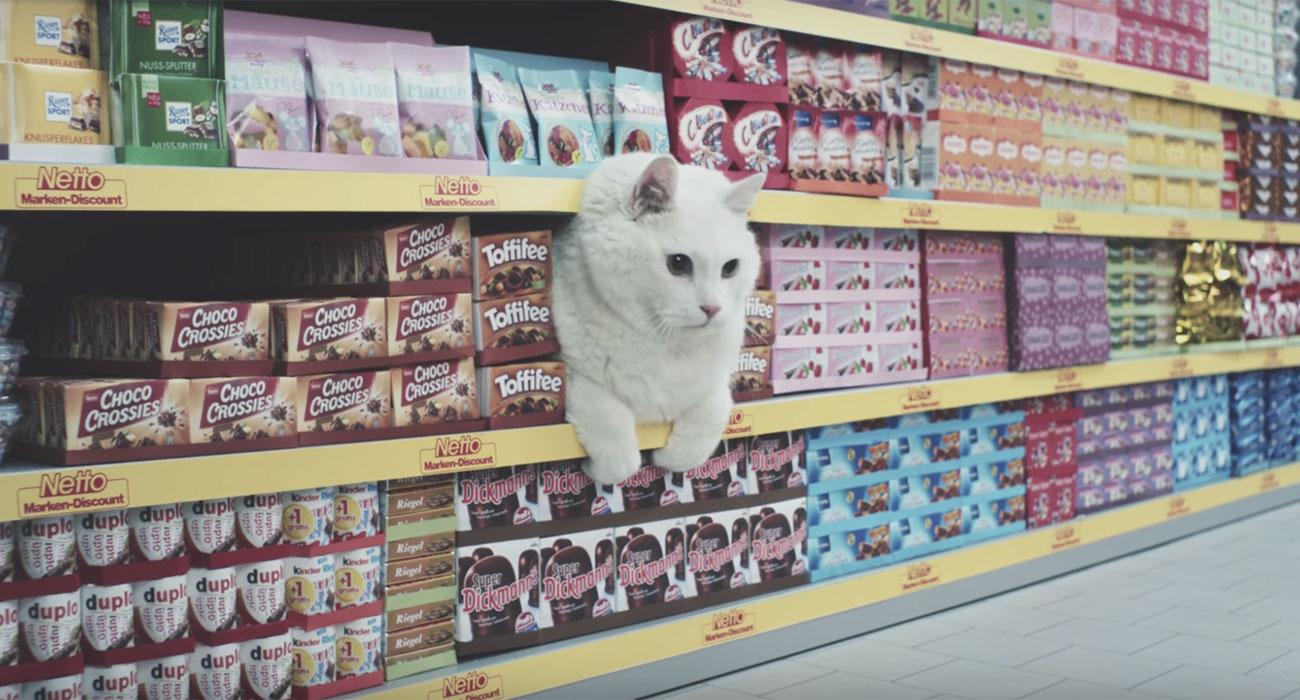 gatto-ciccione-spot