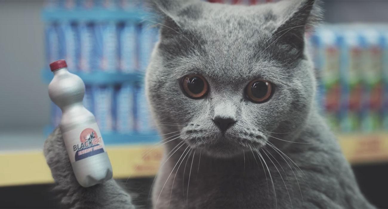 gatto-flacone-discount
