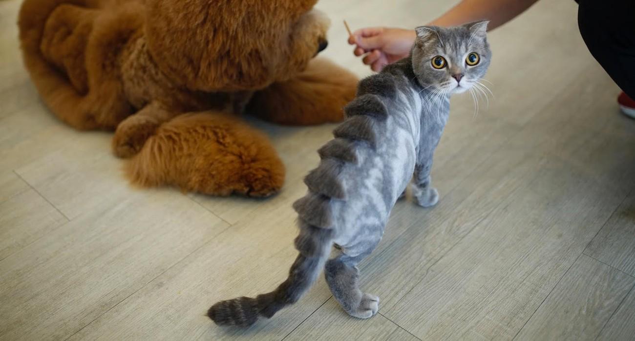gatto dinosauro