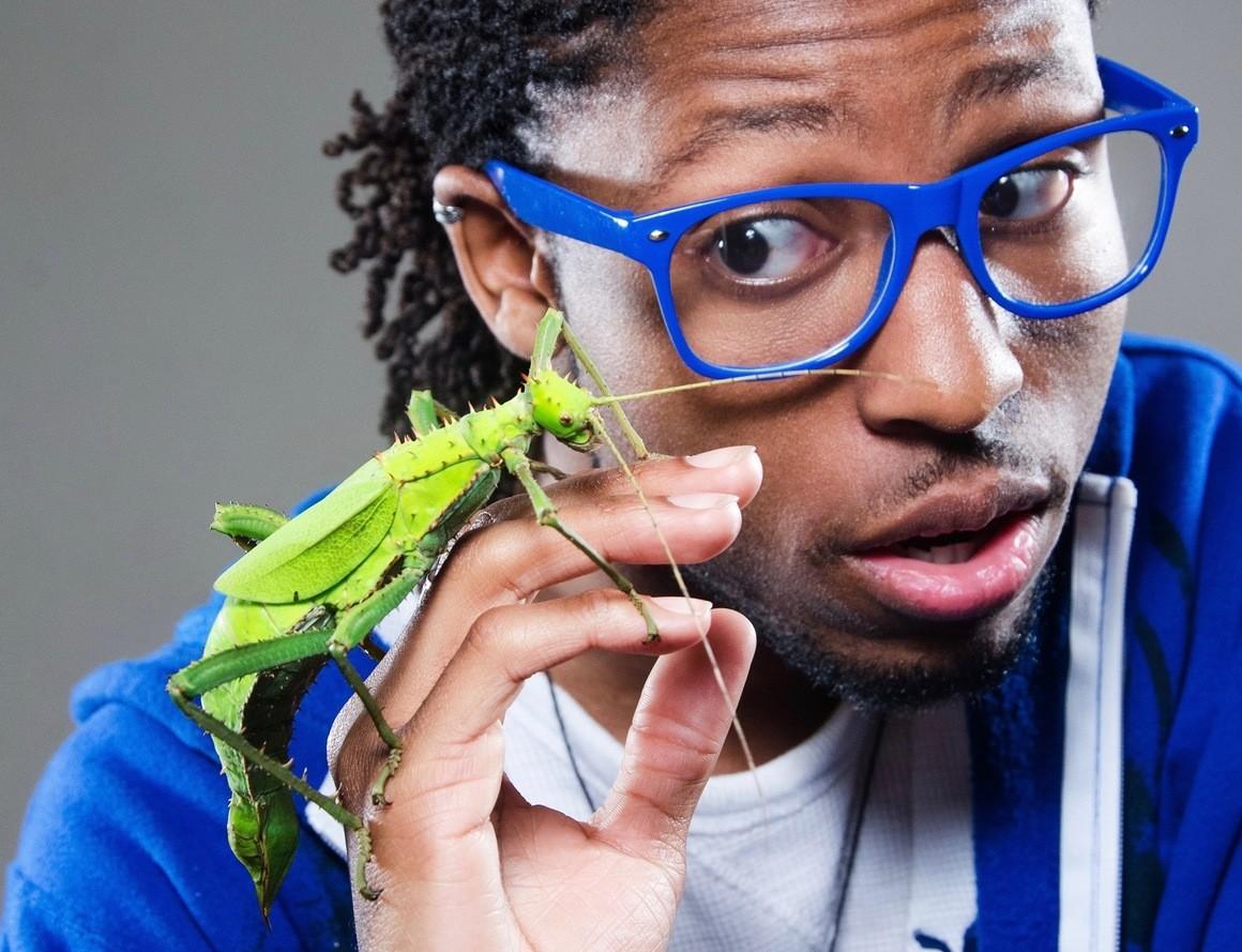 insetti domestici