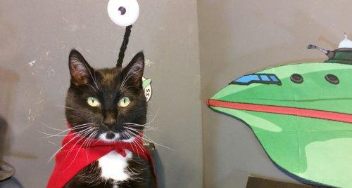 gatti cosplayer