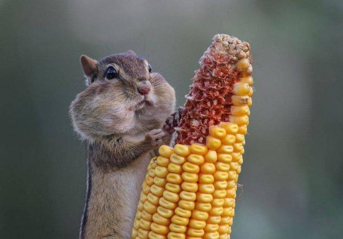 foto animali divertenti 1