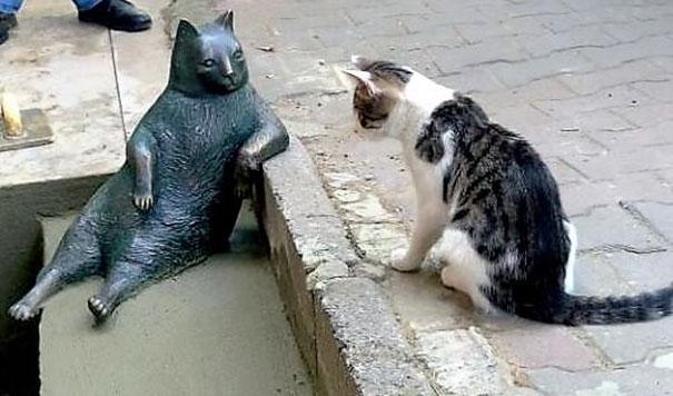 A Istanbul hanno eretto una statua in ricordo del gatto più famoso della città