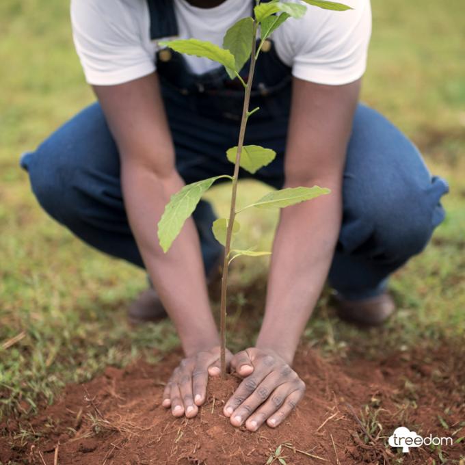 Treedom ti consente di adottare gli alberi a distanza