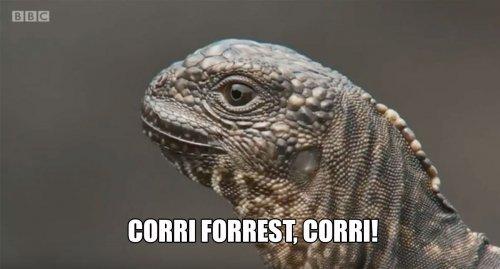 iguana serpenti documentario bbc