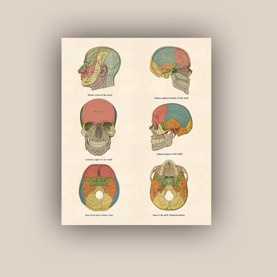 Un poster educativo che diventa arte. Download digitale in formato Jpg pronto per la stampa, misura 20x24 cm, costa 20 euro e si compra qui