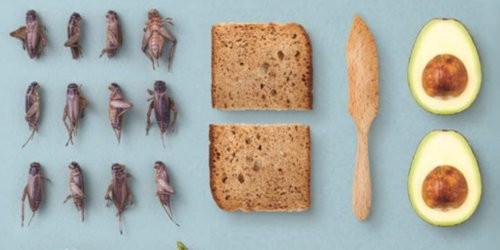 insetto nel piatto libro ricette insetti