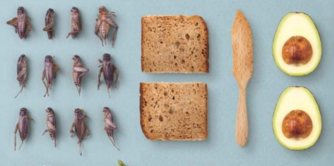 insetti_nel_piatto insetto nel piatto libro ricette insetti