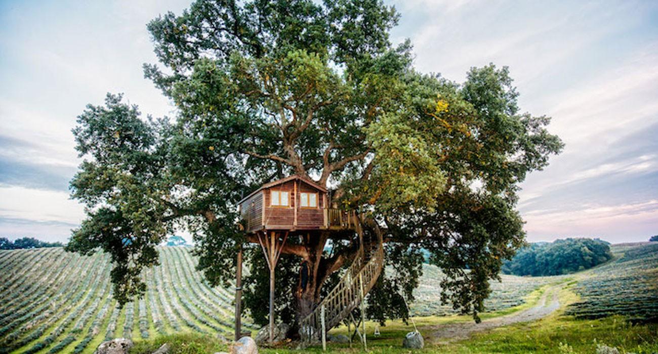 Le 10 case sull'albero più belle d'Italia e come prenotarle per una notte
