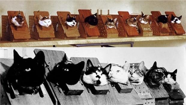 Félicette è stata una dei 14 gatti preparati per una missione spaziale